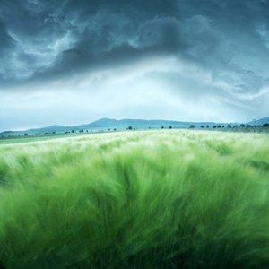 Picture of Barley Field