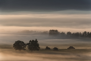 Picture of Dense fog over the moos...