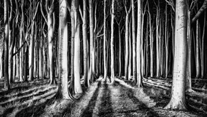 Picture of Ghost Forest