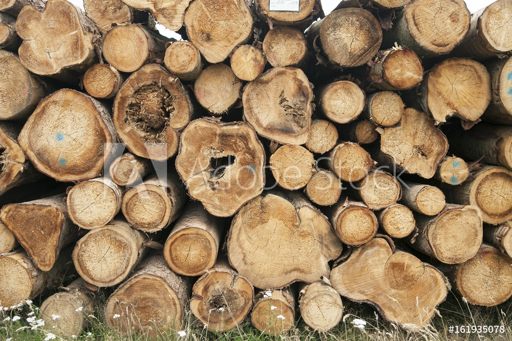 Picture of Timber logs