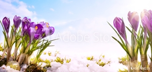 Picture of art spring flower  background
