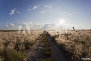 Picture of Africa, Botswana, View of central kalahari game reserve with track