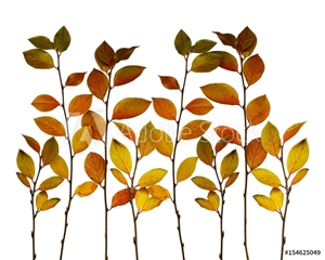 Picture of Autumn twigs border with ginger, green and yellow leaves