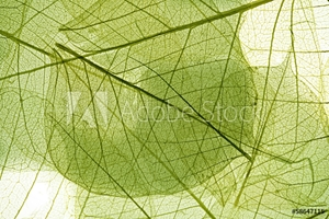 Picture of leaves background