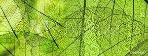 Picture of green foliage texture
