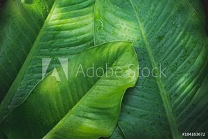 Picture of Green leaf with water drops for background