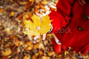 Picture of beautiful autumn leaves. Golden autumn. Selective focus.