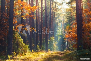 Picture of Autumn forest scene