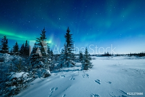 Picture of Snowshoe Hare Tracks And The Aurora Borealis