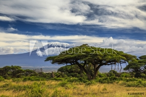 Picture of Beautiful African landscape on the background of Kilimanjaro. Ke