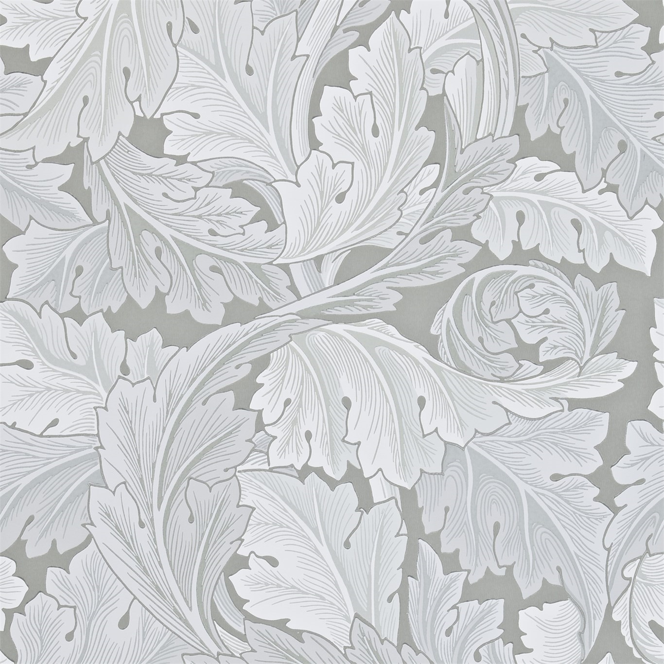Picture of Acanthus - 212553